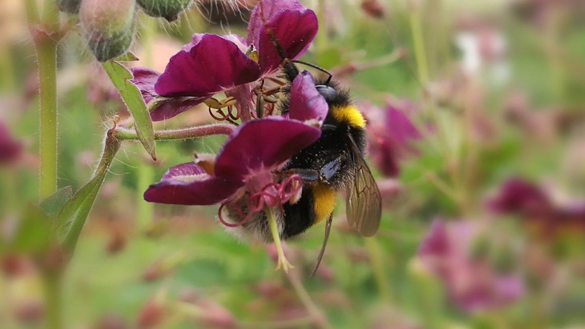 Gartenfreund Insekten
